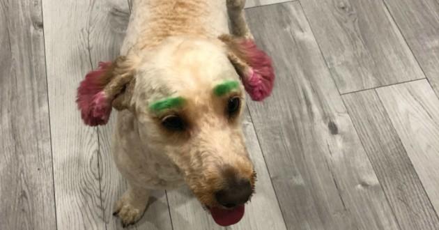 chien Lola teint en fluo