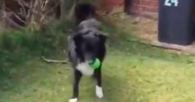 chien ballon de foot