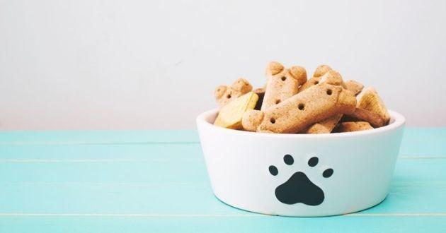 bol de friandises pour chien