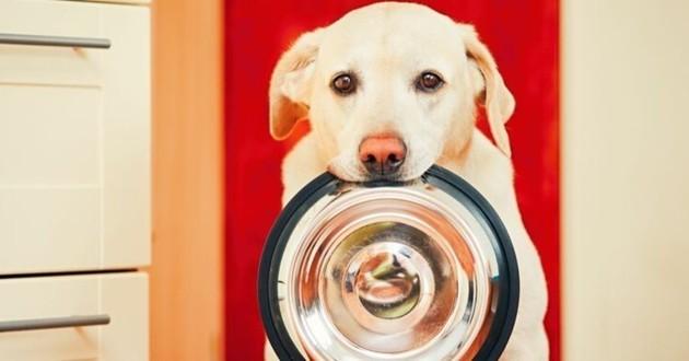 chien qui tient sa gamelle dans sa gueule