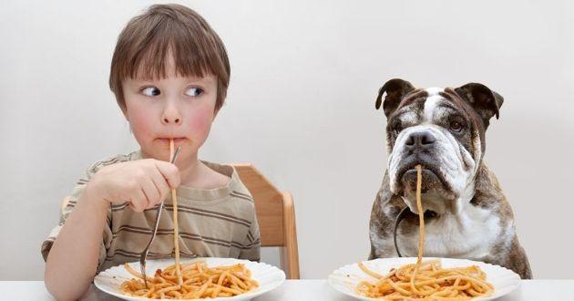 un chien, un petit garçon et des spaghetti