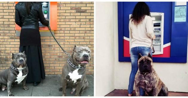 chiens garde du corps
