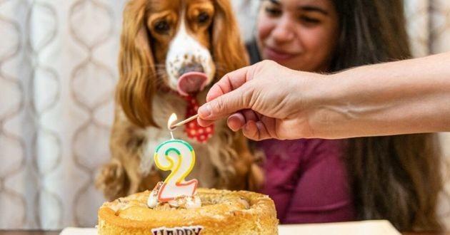 chien anniversaire gateau