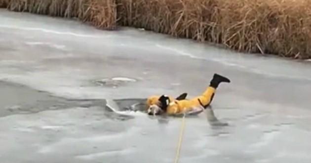 chien lac gelé