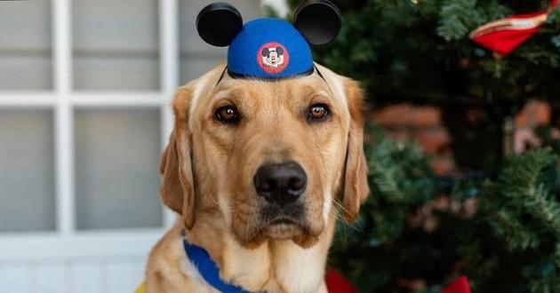 chien de service à Disney