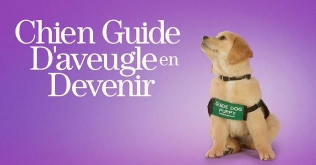 chien guide sur Disney +