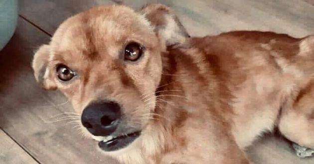 chien réunionnais paralysé arrière train