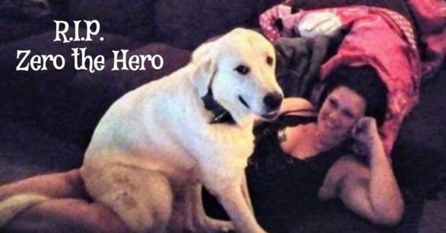 chien héros mort
