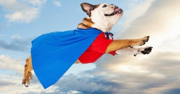 chien héros