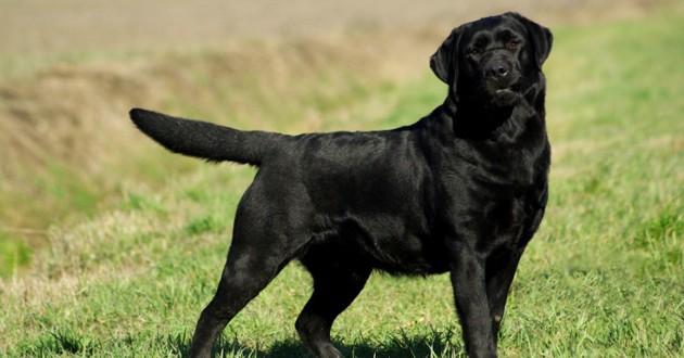 chien noir sauve chat