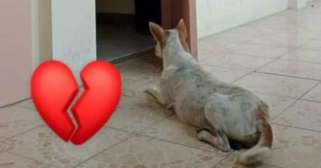 chien qui attend dans un hopital