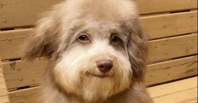chien visage humain