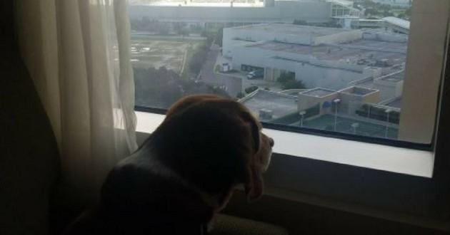 hotel hyatt orlando chien ouragan irma