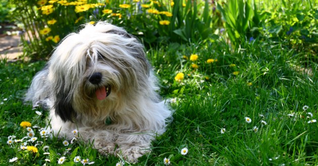 chien jardin fleurs