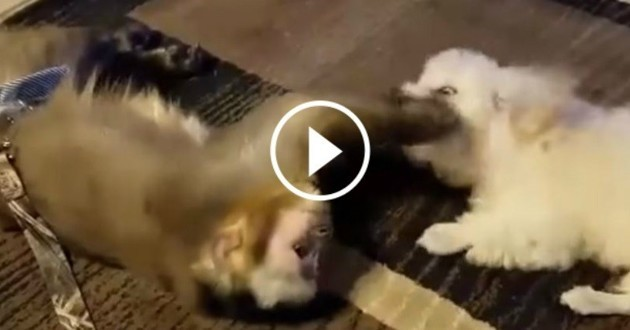 chien jeu singe