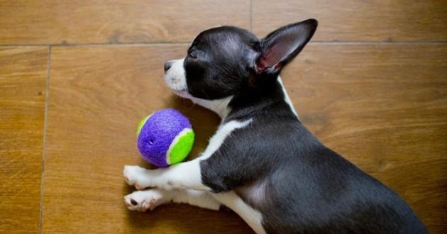 chien joue jouet