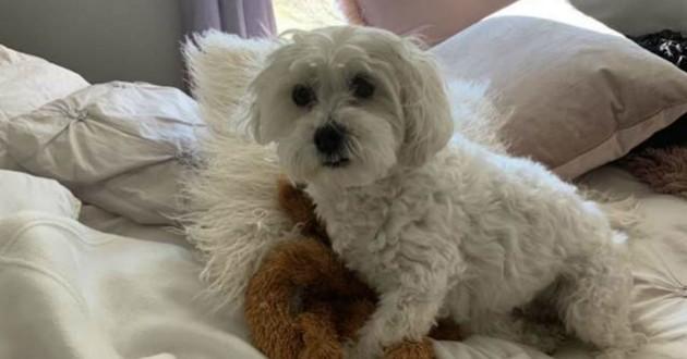 chien blanc avec son jouet préféré
