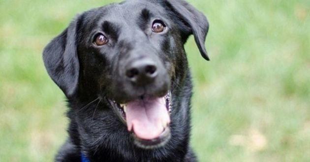chien noir souriant
