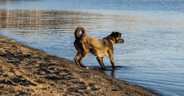 Empoisonnement chien lac