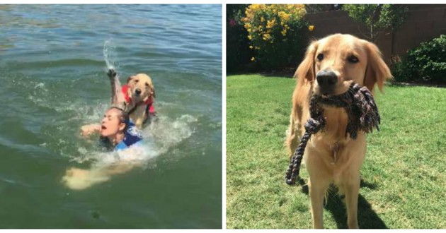 chien golden lac