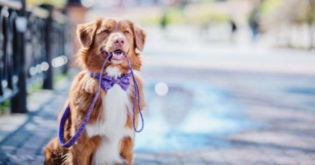 un chien qui tient sa propre laisse en ville