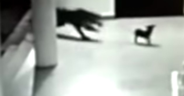 chien leopard