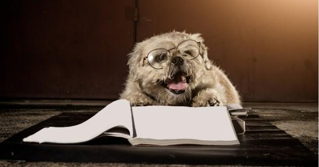 chien et livre