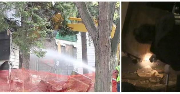 chiots maison détruite