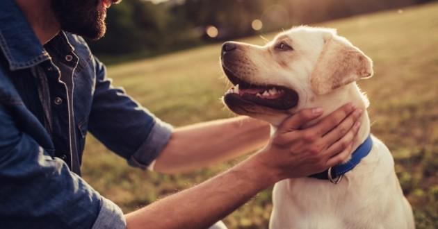 chien et son maître