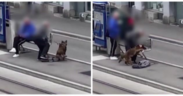 chien maltraité tram