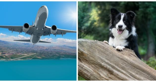 chien mange passeport