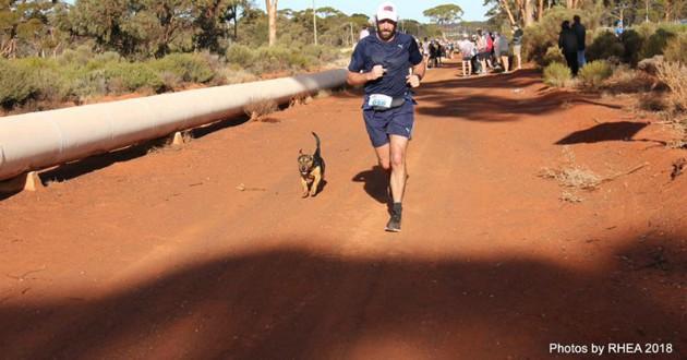 chien marathon