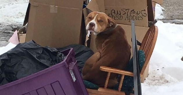 chien abandonné déménagement