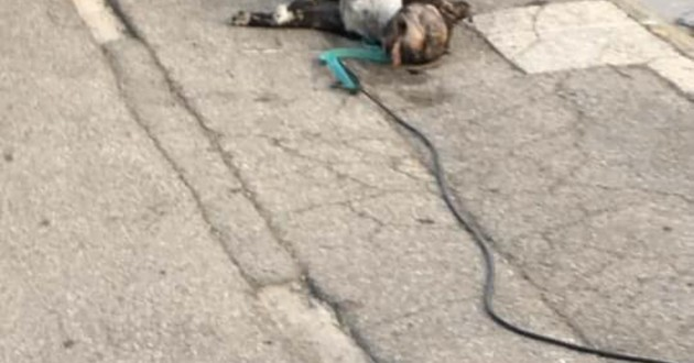 chien mort marseille