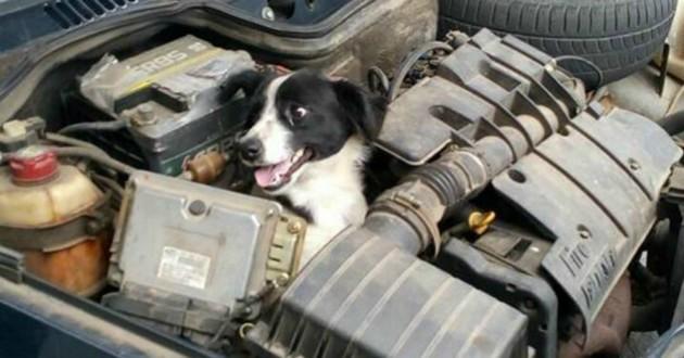 chien moteur voiture