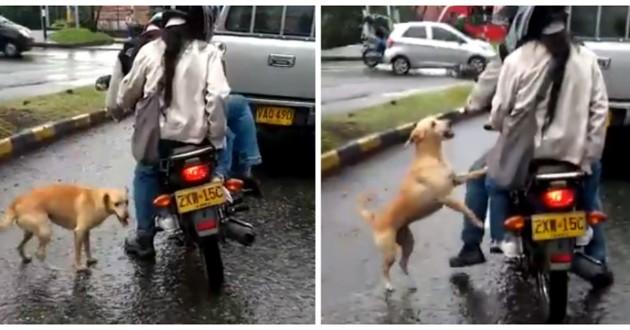 chien moto