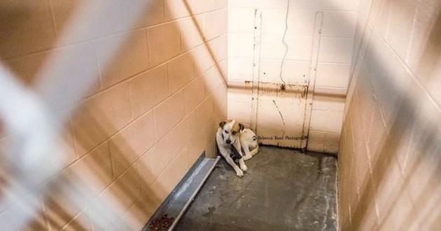 chien terrorisé refuge