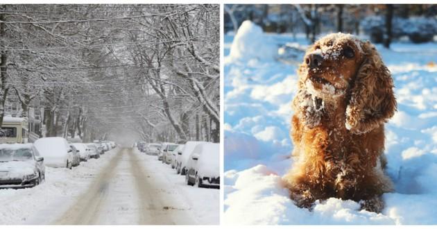 chien cocker neige