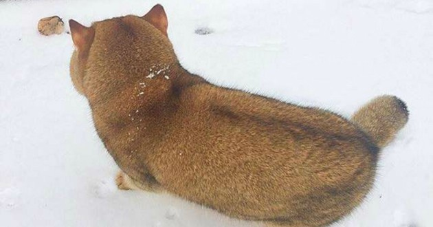chien chat neige
