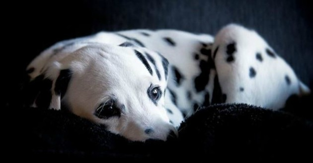 chien nez coeur