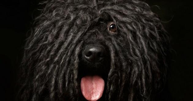 brosse chien furminator
