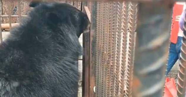 chien noir ours