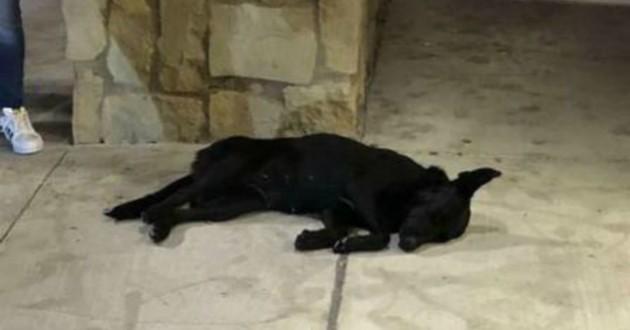 chien noir sol
