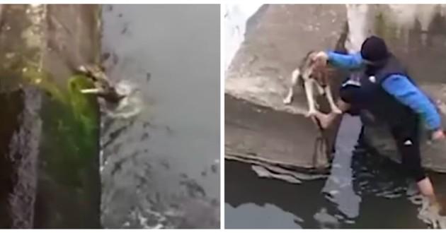chien noyade sauvetage