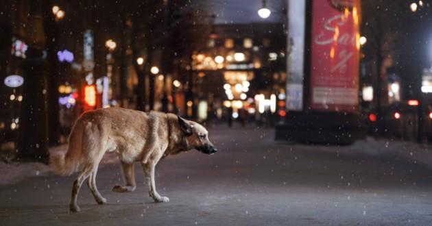 chien nuit livreur
