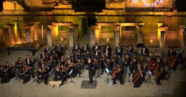 chien orchestre musique