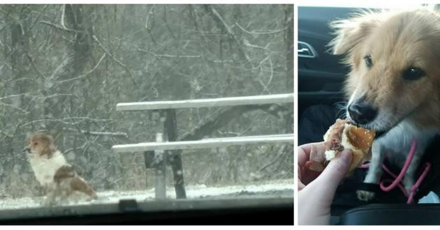 chienne abandonnée parc neige
