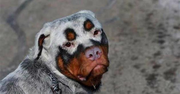 chien pelage incroyable
