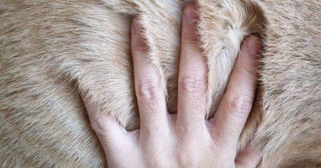 main qui caresse pelage du chien