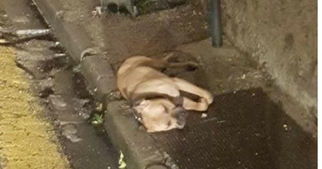 chien mort poteau pendu